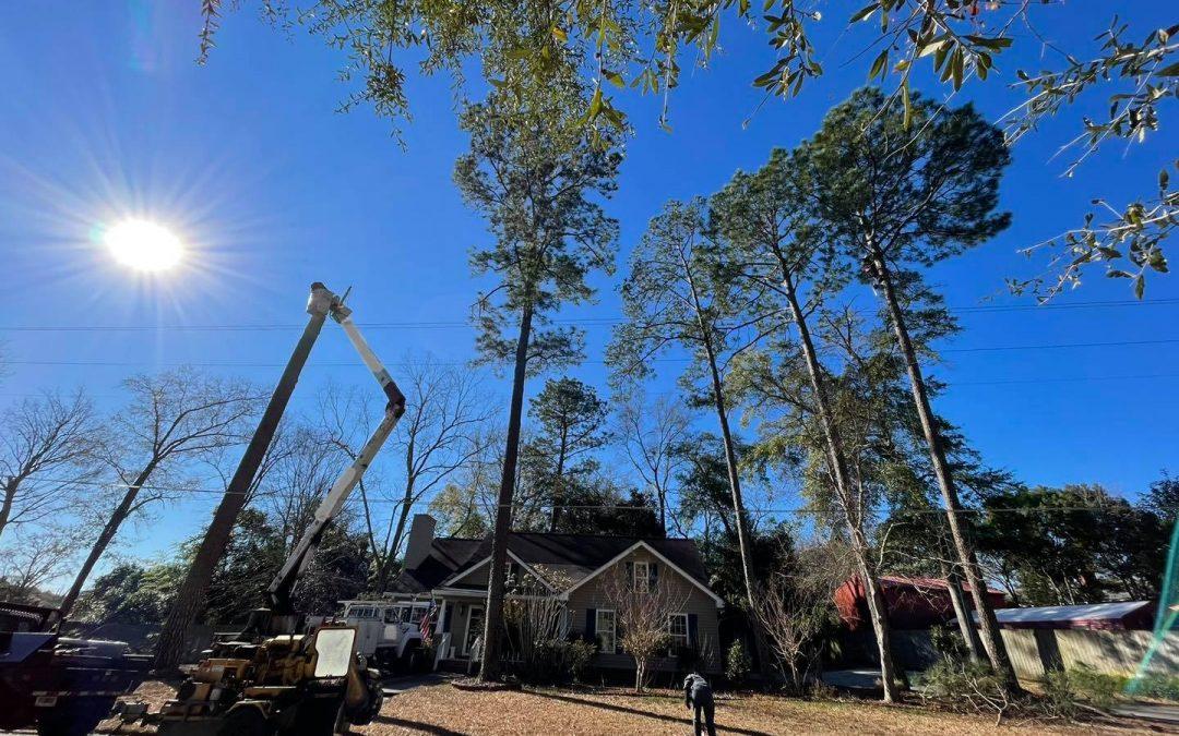 Tree & Shrub Removal