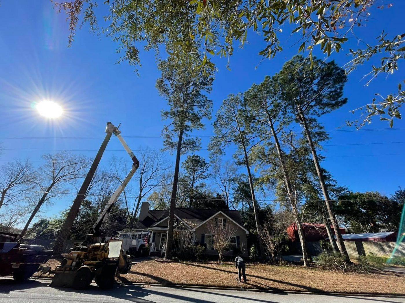 tree removal Groundsmen